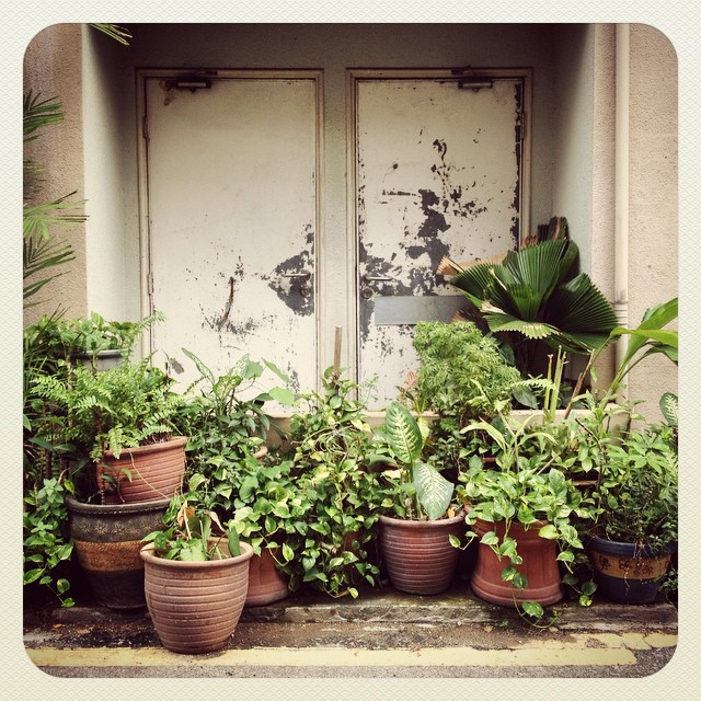 A container garden which looks like it serves as a living fence to keep people away from these particular doors!