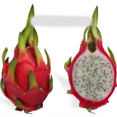 Dragon Fruit Plant